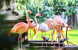 фламинго в Милане